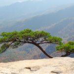Se non potete essere un pino sulla vetta del monte