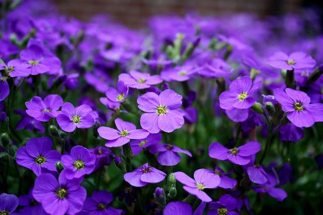 Le violette di Febbraio