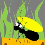 Nica la formica
