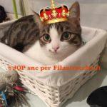 Il mio gatto è un Re
