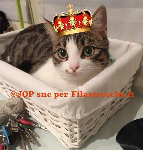 mio gatto è un Re
