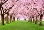 Poesie di Primavera