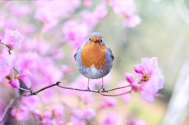Filastrocca di primavera