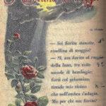 Rosellina di Maggio