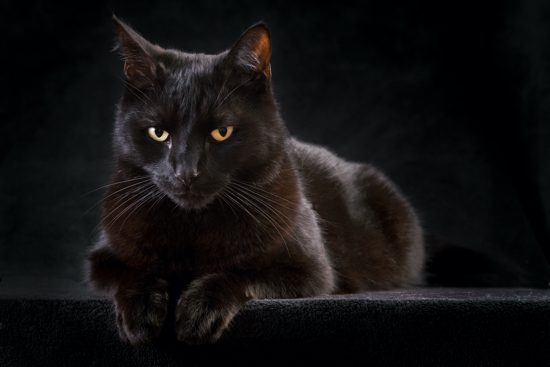 gatto di Halloween