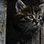 Il gattino di Felino