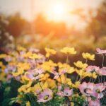 Un giorno mi sorprese la primavera