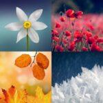 Filastrocca delle stagioni