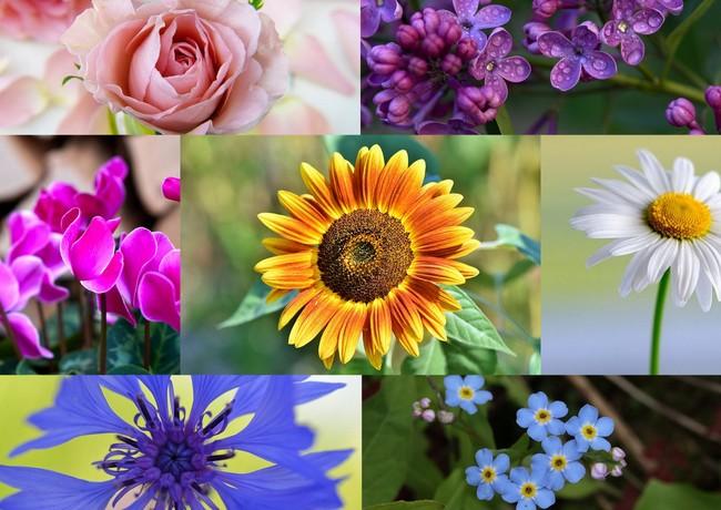 La settimana ci parla di fiori