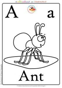 A-ANT-bn-web