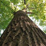 Storia della Festa degli alberi