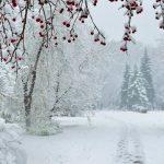 Le più belle Poesie di Inverno