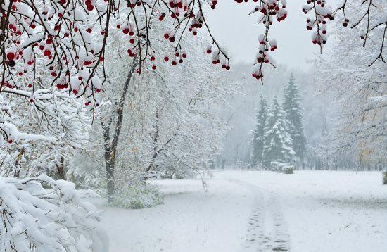 Poesie di Inverno