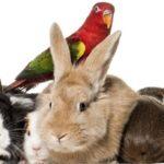 Animali da compagnia: Conigli, cavie, pesci e…
