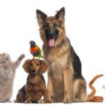 Speciale Animali da compagnia