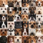 Speciale Animali da compagnia: Cani