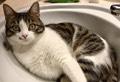 I 10 errori più comuni da non commettere con i gatti
