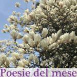 Poesie del mese di Maggio
