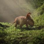 Dino-Day: una giornata insieme ai dinosauri