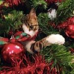 10 buoni motivi per adottare un gatto #ascuoladipetcare