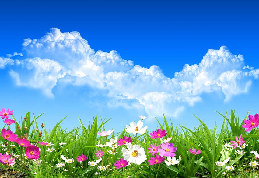 Tutto sui fiori filastrocche per tutti in - Immagini di fiori tedeschi ...