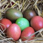 Decorare le uova sode di Pasqua con colori naturali