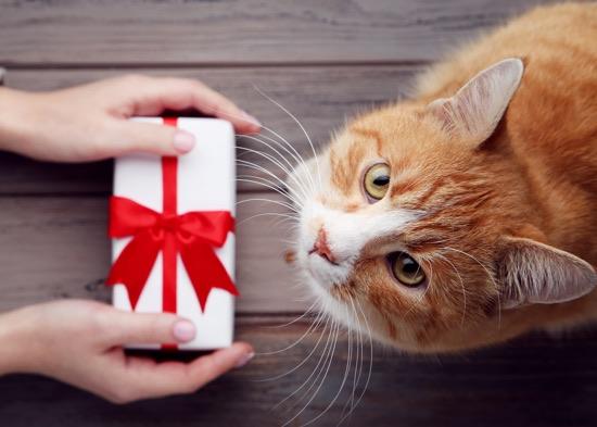 regali per cani e gatti