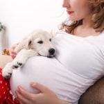 Cane o gatto e bebè: Come organizzare al meglio la convivenza