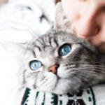 Microchip anche per il gatto, perché è importante?
