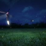 Perché le lucciole si illuminano