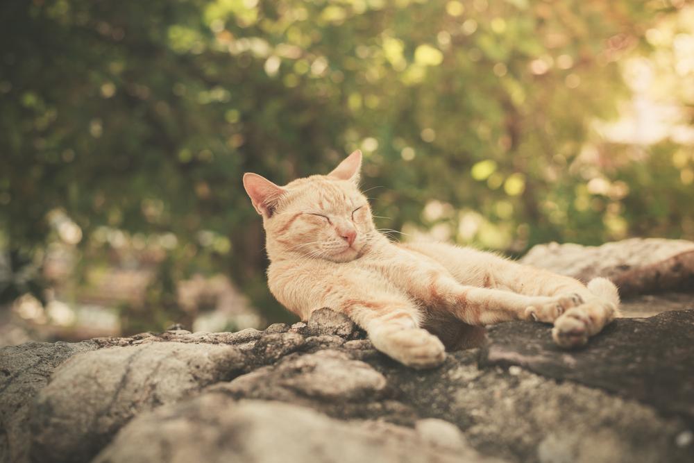 Gatto disteso al sole