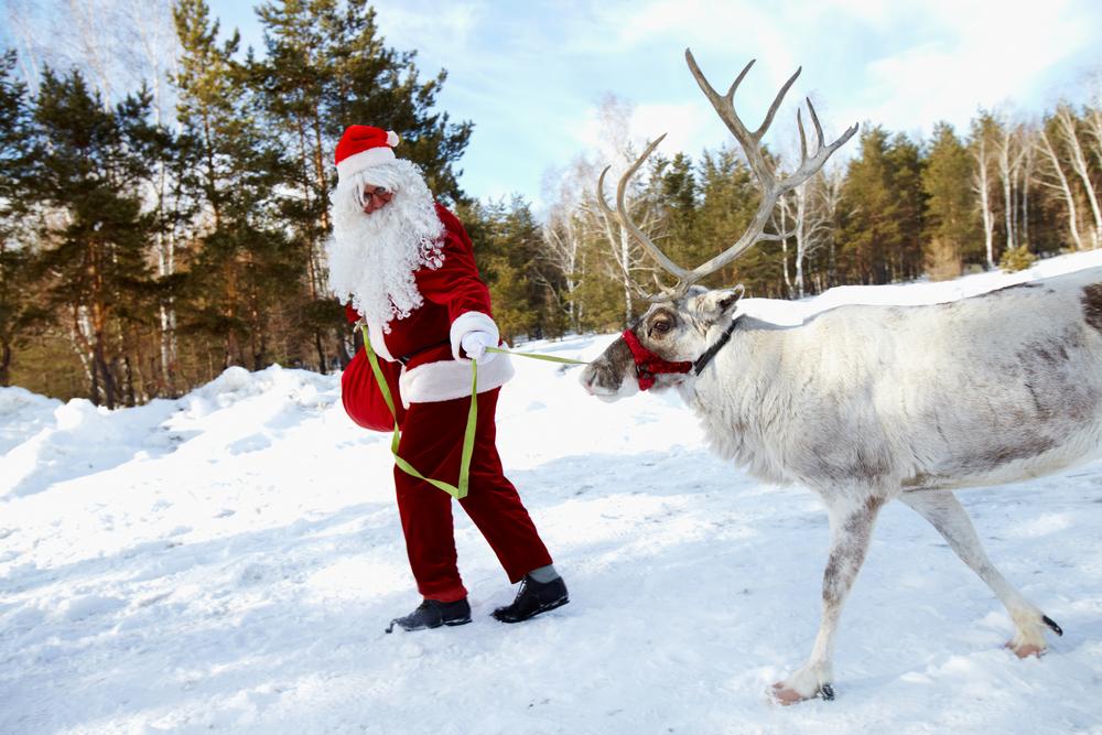 Renne Di Babbo Natale Nomi.Le Renne Di Babbo Natale Come Si Chiamano Filastrocche It