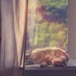 Perché il gatto dorme dappertutto?
