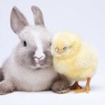 Gli animali della Pasqua