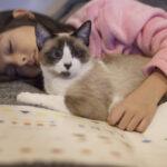 Coccolare un gatto: come farlo nel modo più felino