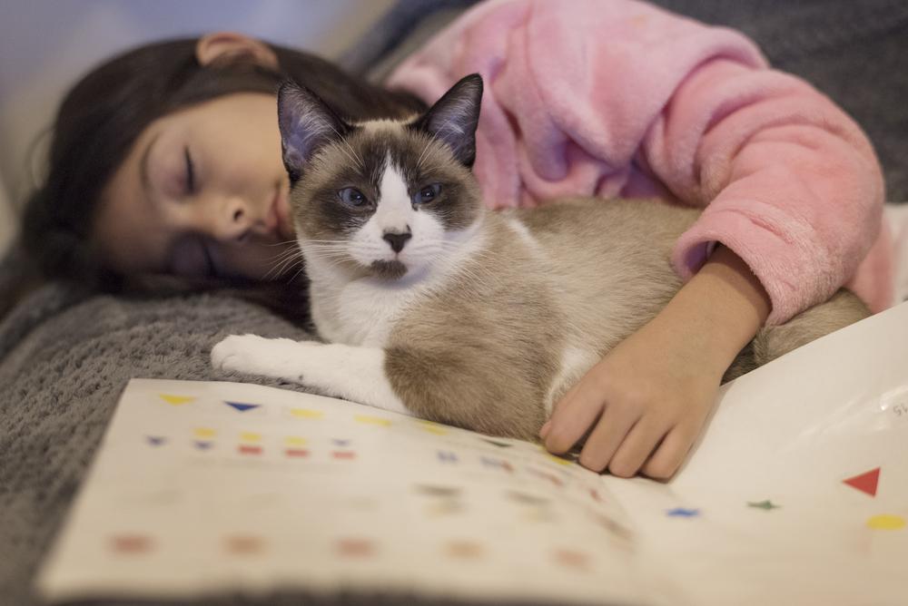 coccolare gatto