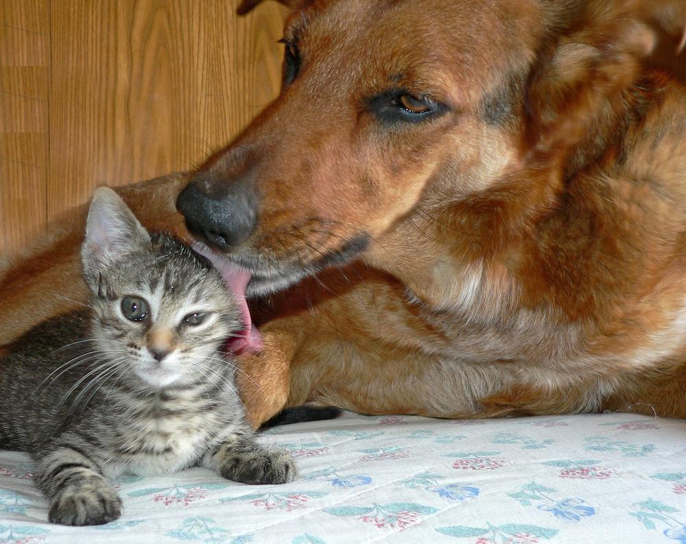vivere con cani e gatti