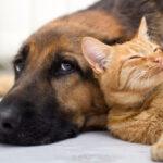 Vivere con cani e gatti fa bene