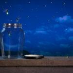 Lucciole: perché si illuminano