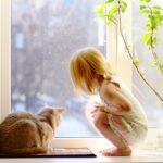 Come fare amicizia con il gatto