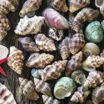 I molluschi e conchiglie: un mondo da scoprire