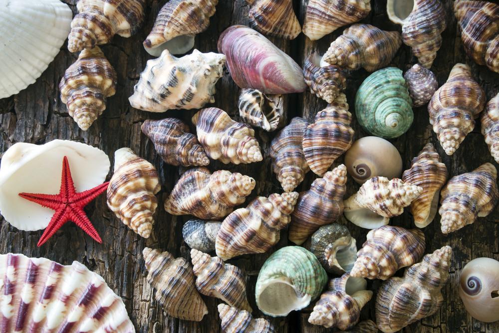 molluschi e conchiglie