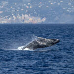 Ci sono le balene nel Mediterraneo