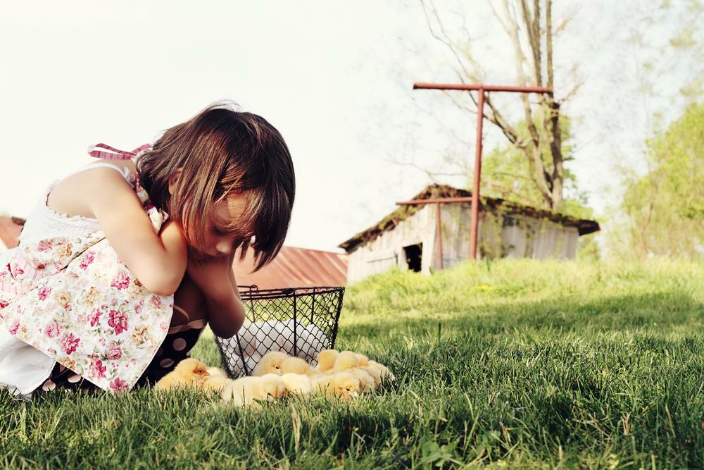 animali della fattoria bambina e pulcini