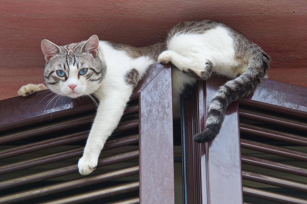 gatti si arrampicano